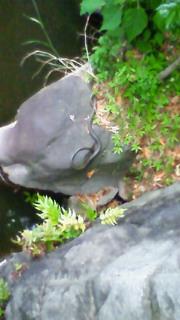 蛇と亀を見る。吉兆か(<br />  ´∀`)