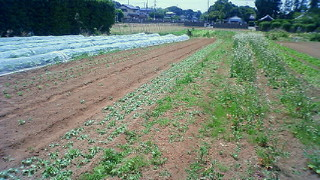 完全無農薬の畑を見学